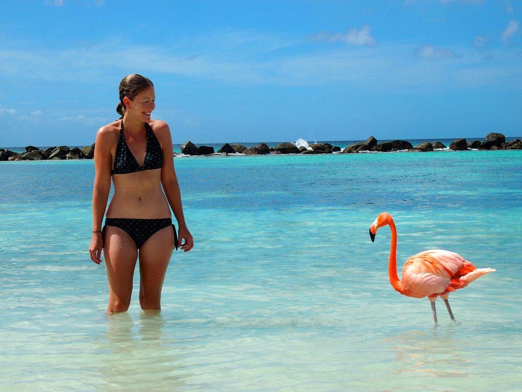 Aruba - Desconectour